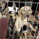 Sören, einer der vielen Junghunde im Shelter