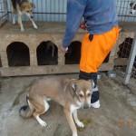 ein adoptierter Hund wird markiert