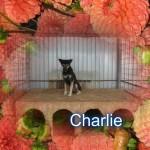 Charly M