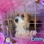 Emmy sucht schon lange