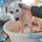 Alain, früher Abrahim