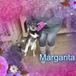 Margarita, Freudin von Rosali Kira