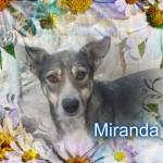 Miranda wurde auf den Kopf geschlagen