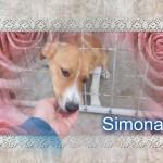 Simona könnte sofort ihr Köfferchen packen