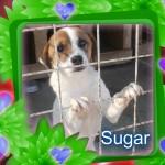 Sugar Kiwi ist eine sehr Nette